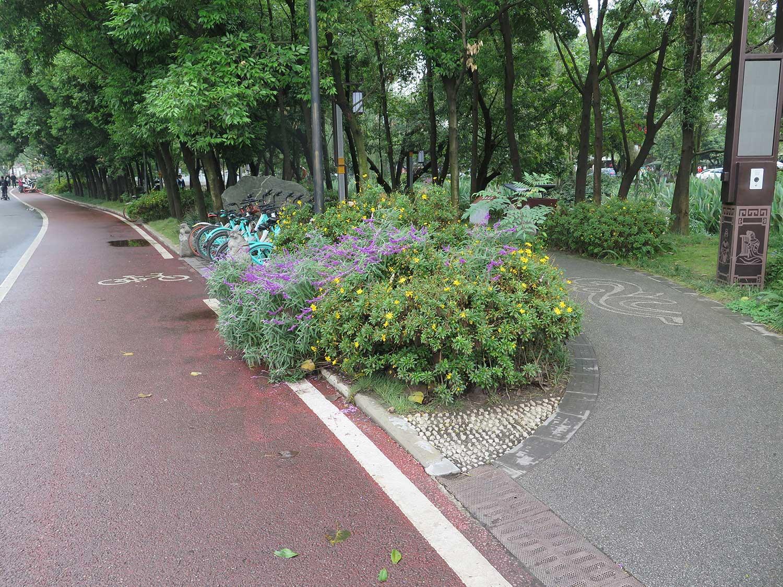 verdant medians